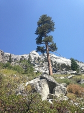 sequoia001