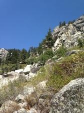 sequoia009